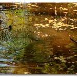 広大な沼地・湿地帯を抜けるサバイバル術