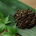 サバイバル時における昆虫食の基本と食べてはいけない虫(調理動画)