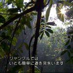 「誘拐多発地帯、パナマのジャングルから脱出後編」サバイバル、ベア・グリルス
